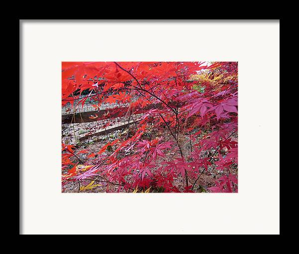 Nature Framed Print featuring the photograph Splendid Fall by Valia Bradshaw