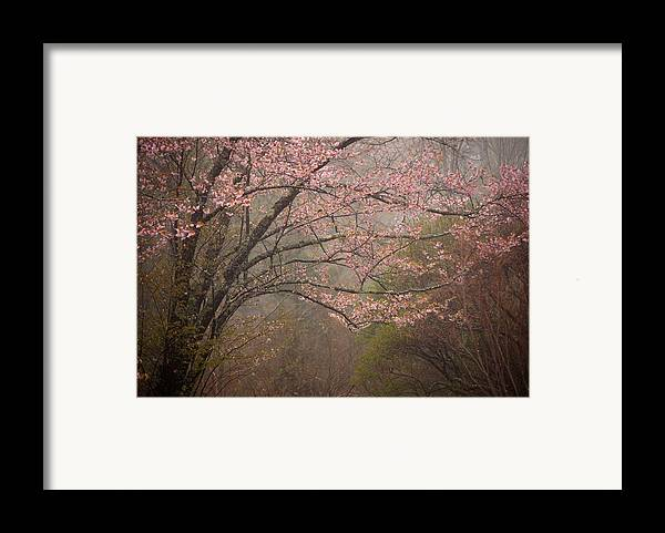 Maine Framed Print featuring the photograph Spring Woods by Patrick Downey