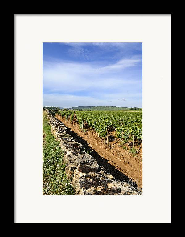 Agricultural  Framed Print featuring the photograph Stone Wall. Vineyard. Cote De Beaune. Burgundy. France. Europe by Bernard Jaubert