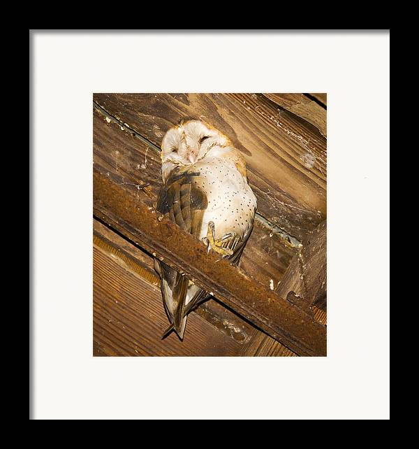 Owl Framed Print featuring the photograph Stop Bothering Me by Jean Noren