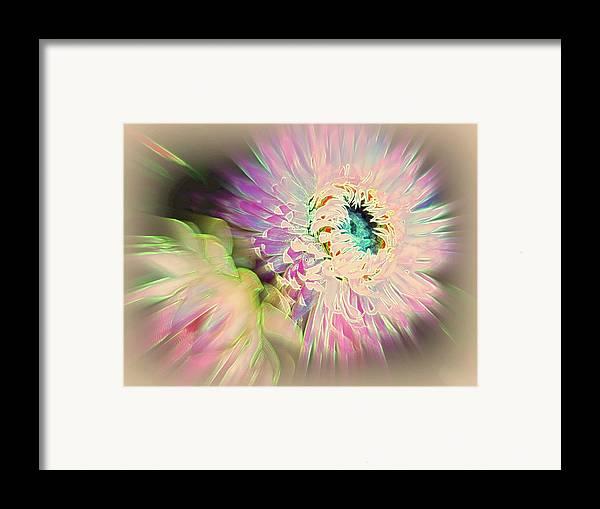 Strawflower Framed Print featuring the photograph Strawflower Awakening by Shirley Sirois