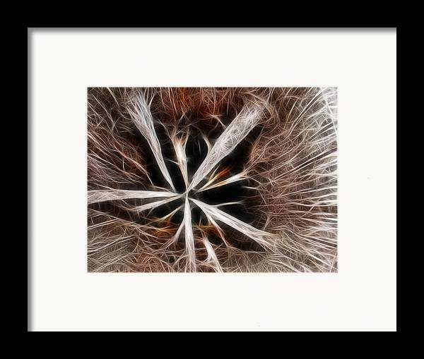 Abstract Framed Print featuring the photograph Stumped by Shane Bechler