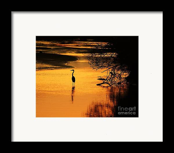 Heron Framed Print featuring the photograph Sublime Silhouette by Al Powell Photography USA