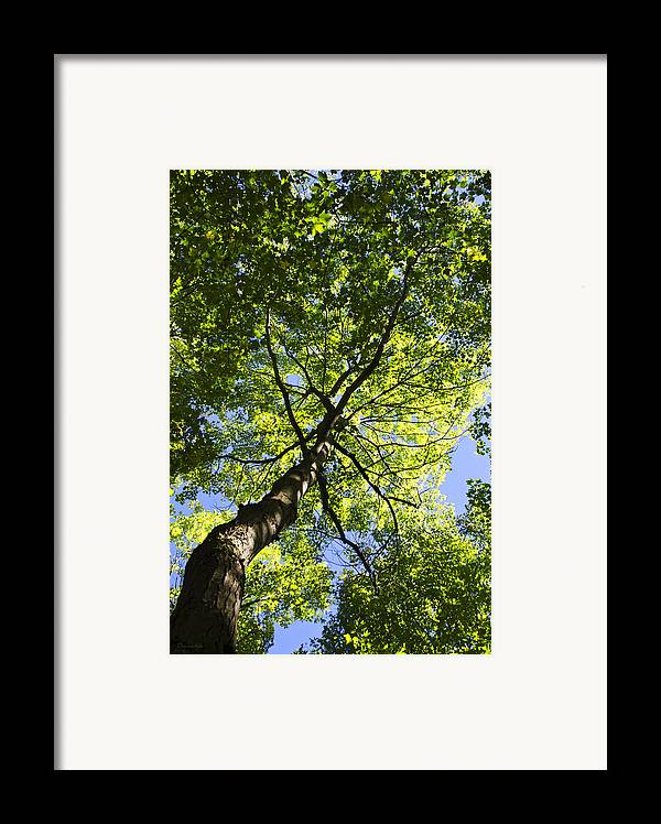 Tree Framed Print featuring the photograph Summer Tree Canopy Landscape by Christina Rollo