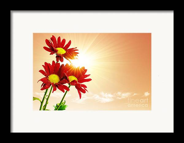 Background Framed Print featuring the photograph Sunrays Flowers by Carlos Caetano