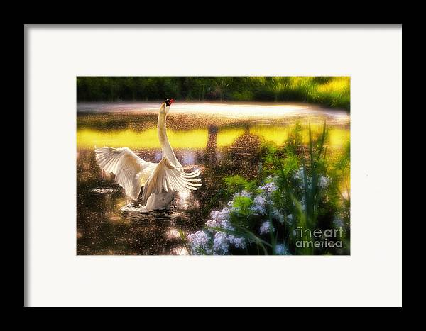 Swan Framed Print featuring the photograph Swan Lake by Lois Bryan