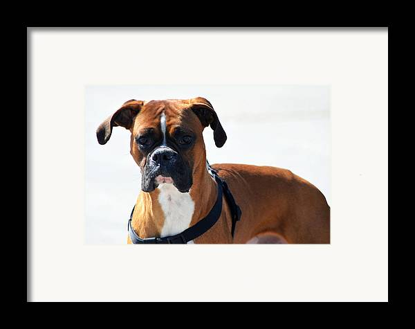 Boxer Framed Print featuring the photograph The Challenge by Camille Lopez