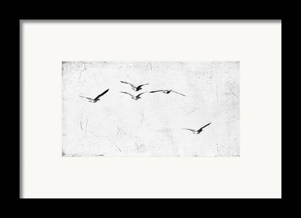 Geese Framed Print featuring the photograph The Leader by Rebecca Cozart