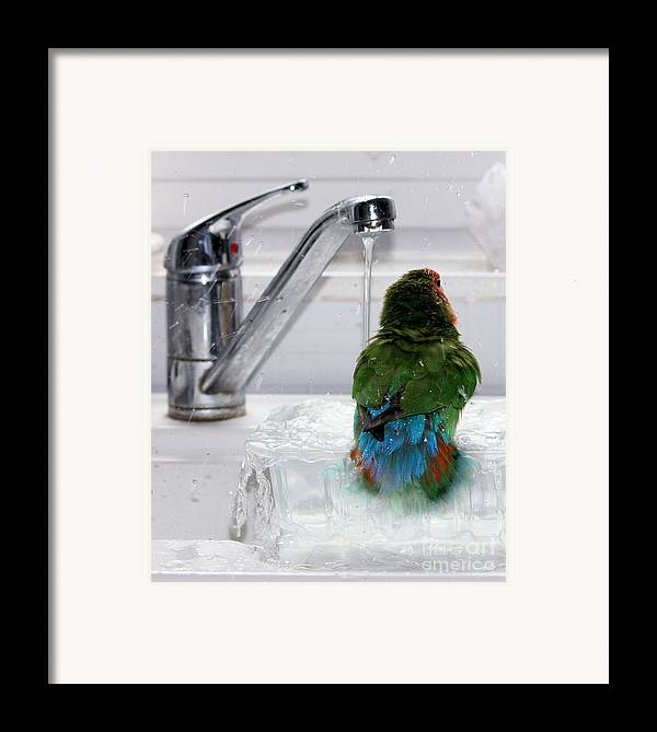 Bird Framed Print featuring the photograph The Lovebird's Shower by Terri Waters