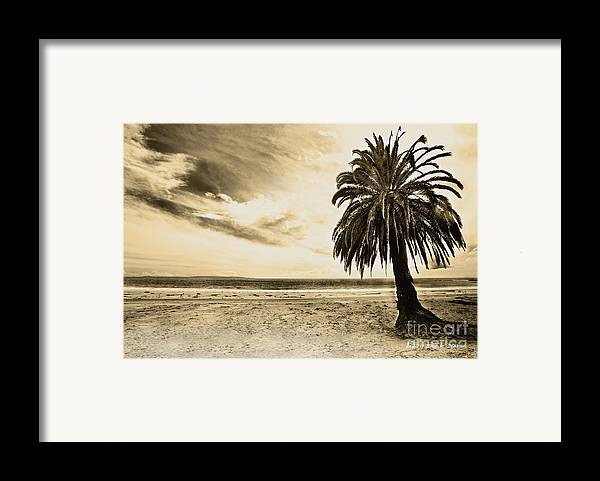 Gaviota Framed Print featuring the photograph The Palm Swayed As The Storm On The Ocean Blew In by Artist and Photographer Laura Wrede