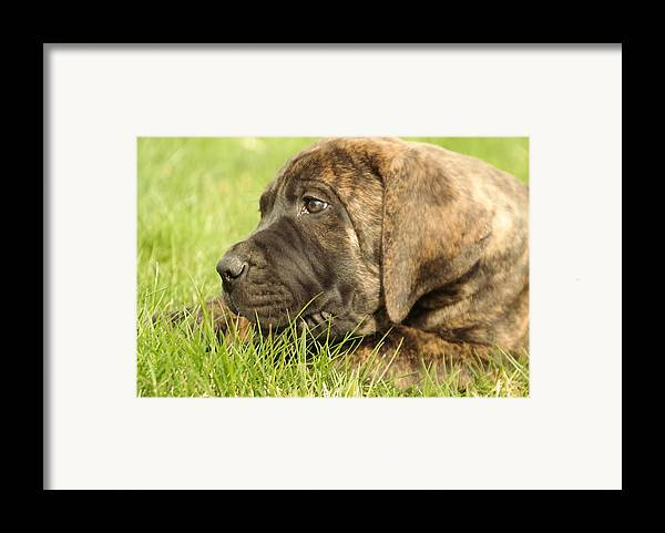 Dogs Framed Print featuring the photograph There Is Nothing Better Than A Bone And Some Warm Grass by Jeff Swan