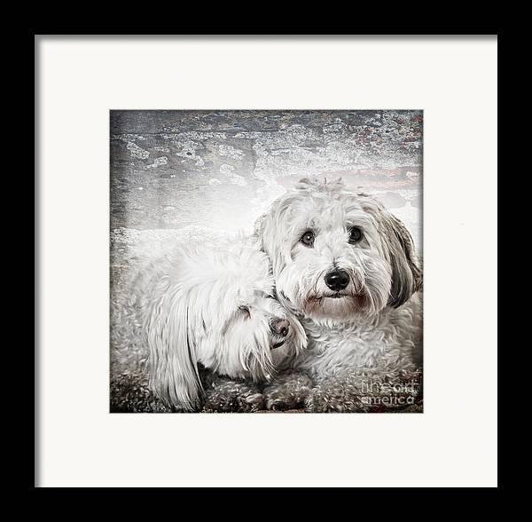 Dogs Framed Print featuring the photograph Together by Elena Elisseeva