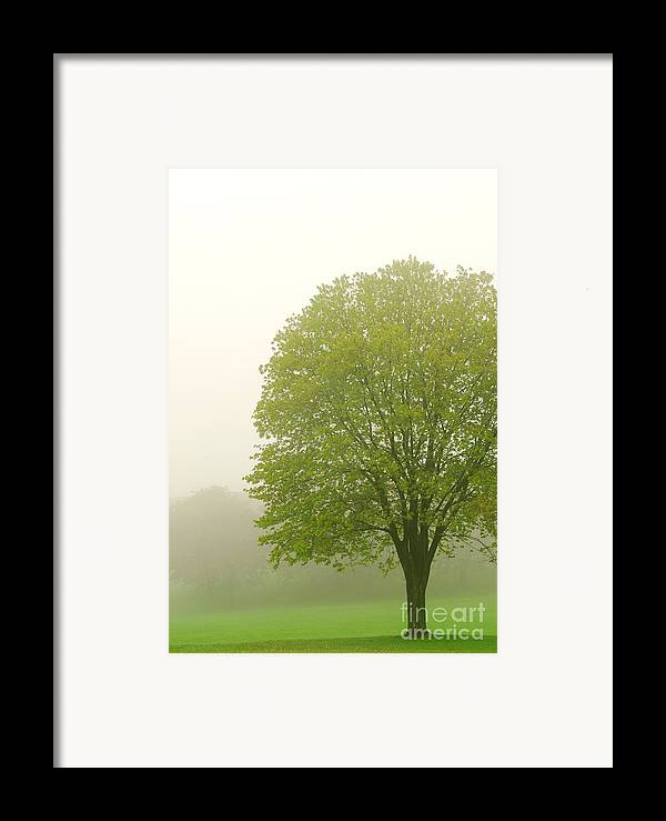 Fog Framed Print featuring the photograph Tree In Fog by Elena Elisseeva