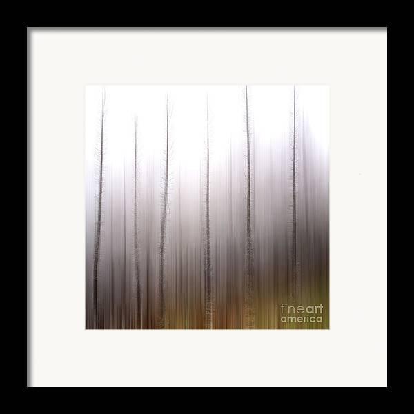 Bare Framed Print featuring the photograph Tree Trunks by Bernard Jaubert