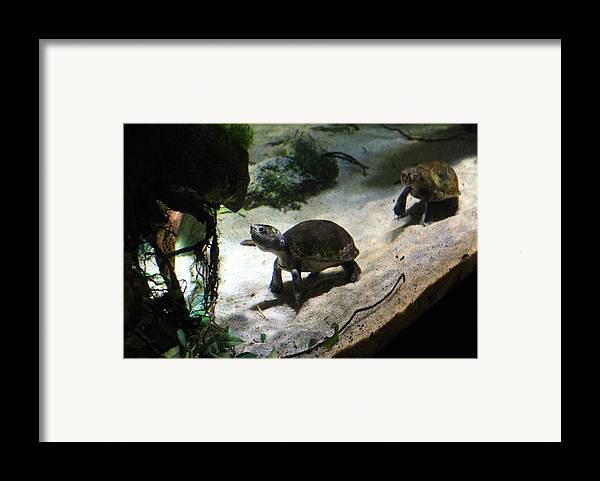 Inner Framed Print featuring the photograph Turtle - National Aquarium In Baltimore Md - 121218 by DC Photographer