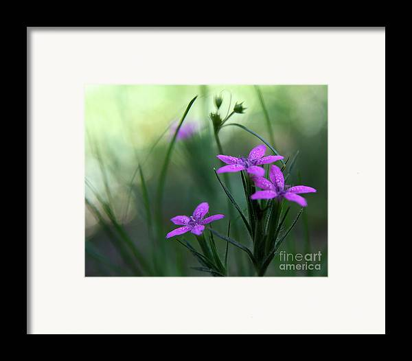 Purple Framed Print featuring the photograph Ultra Violet by Neal Eslinger