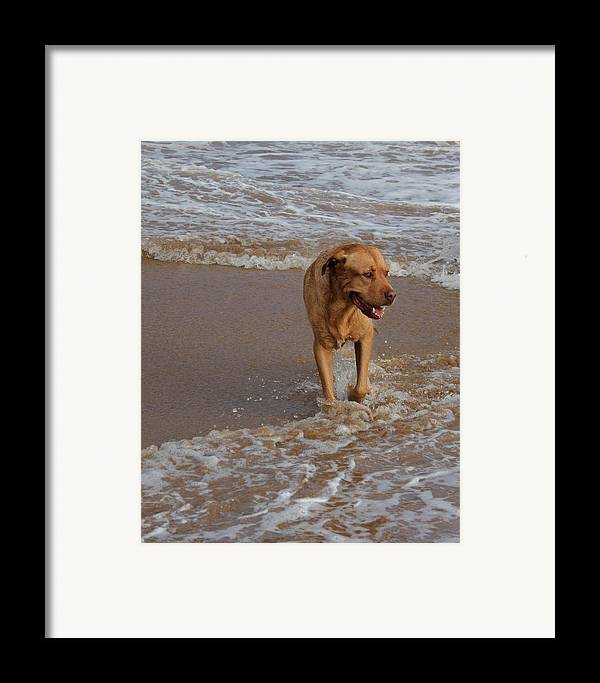 Dog Photo Framed Print featuring the digital art Waiting For Dad by Bonita Hensley