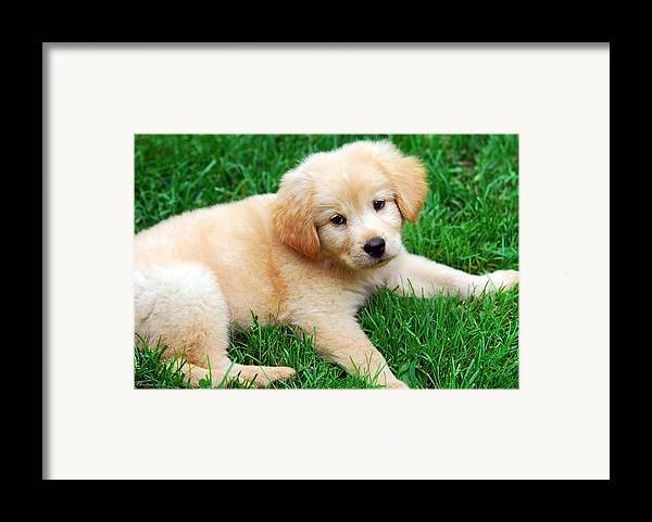 Dog Framed Print featuring the photograph Warm Fuzzy Puppy by Christina Rollo