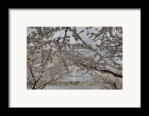 America Framed Print featuring the photograph Washington Monument - Cherry Blossoms - Washington Dc - 011323 by DC Photographer