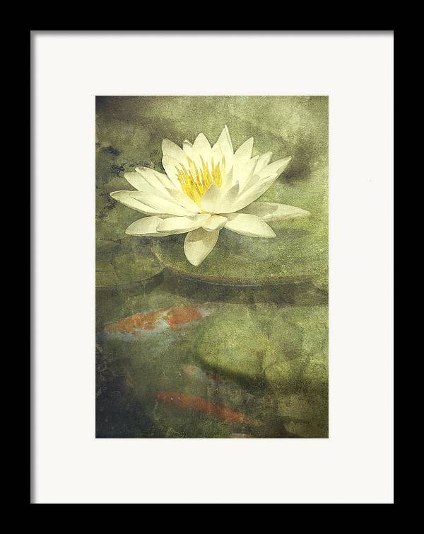 Water Lily Framed Print featuring the photograph Water Lily by Scott Norris