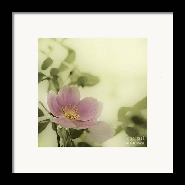 Rosa Acicularis Framed Print featuring the photograph Where The Wild Roses Grow by Priska Wettstein