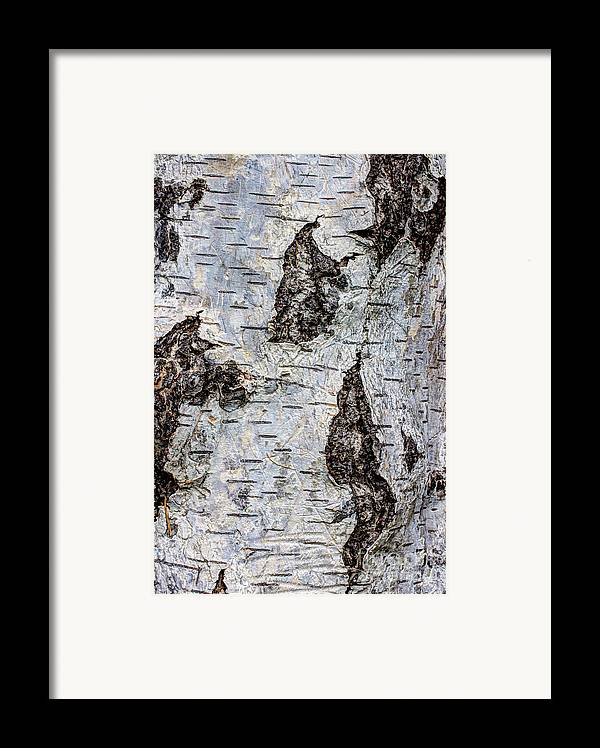 Organic Framed Print featuring the photograph White Birch Abstract by Heidi Smith