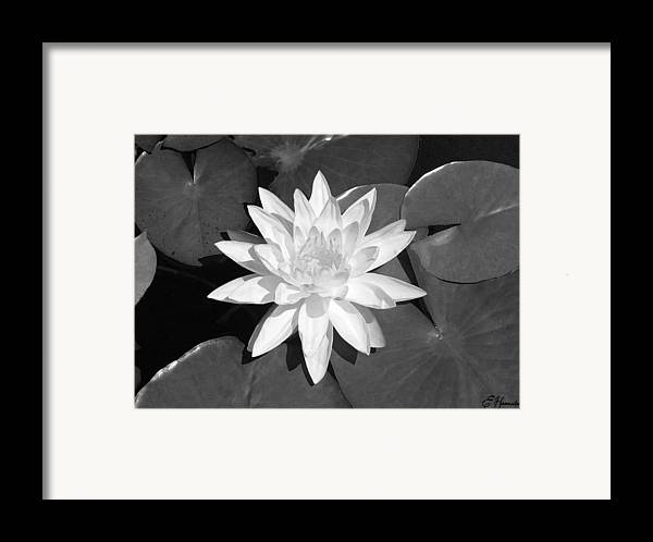White Lotus Framed Print featuring the painting White Lotus 2 by Ellen Henneke