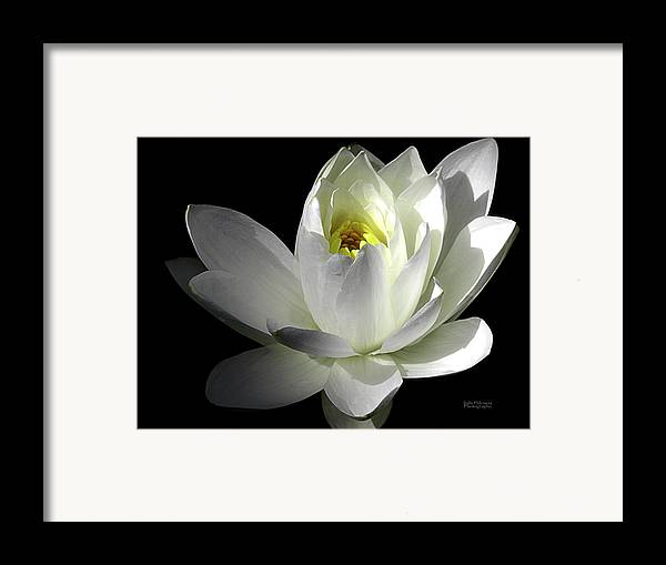 Water Lily Framed Print featuring the photograph White Petals Aquatic Bloom by Julie Palencia