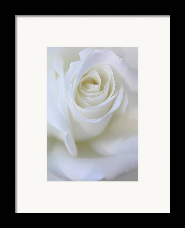Rose Framed Print featuring the photograph White Rose Floral Whispers by Jennie Marie Schell