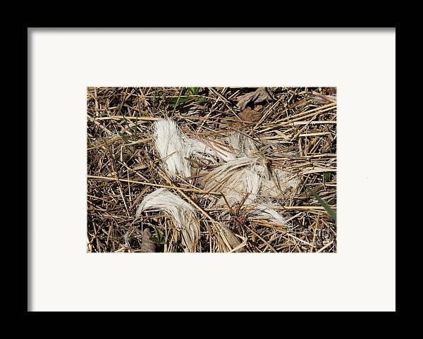Odocoileus Virginianus Hair Framed Print featuring the photograph White-tailed Deer Hair by Linda Freshwaters Arndt