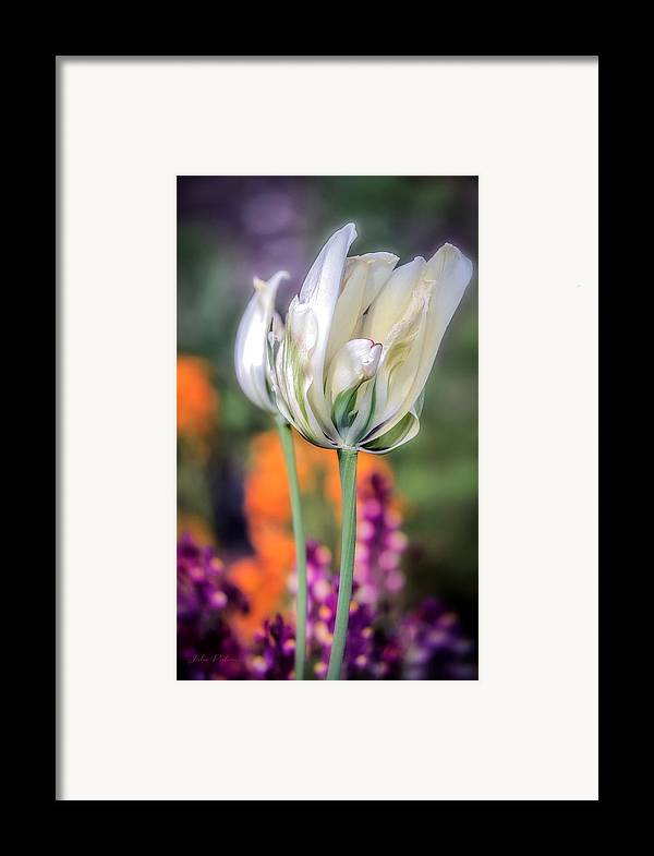 White Tulip Framed Print featuring the photograph White Tulip Splash Of Color by Julie Palencia