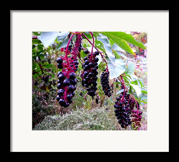 Berry Framed Print featuring the glass art Wild Berry by George Griffiths