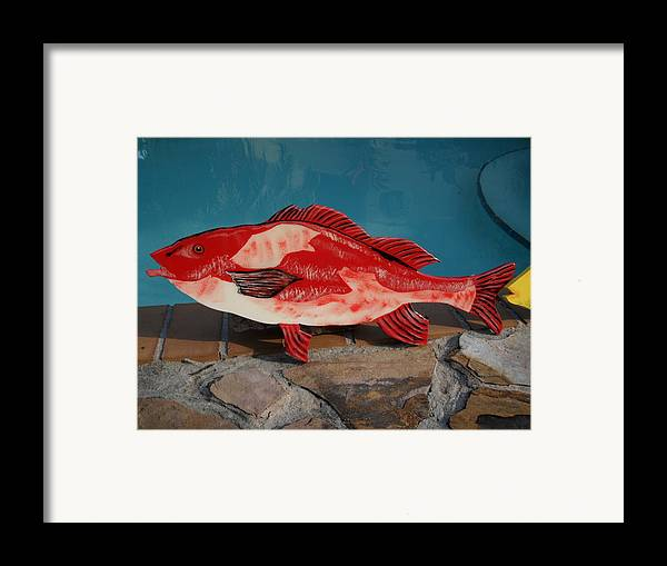 Fish Framed Print featuring the mixed media Wooden Red Snapper by Val Oconnor