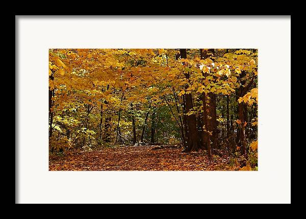 Woodland Framed Print featuring the photograph Woodland Path by Bruce Bley