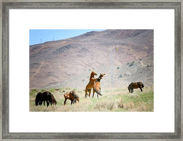 Young Mustangs Playing Framed Print featuring the photograph Young Mustangs Playing 1 by Maria Jansson