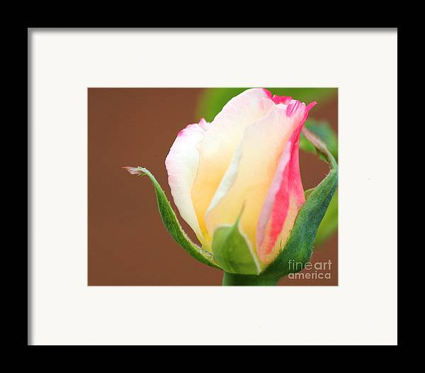 You've Touched My Heart Framed Print by  The Art Of Marilyn Ridoutt-Greene