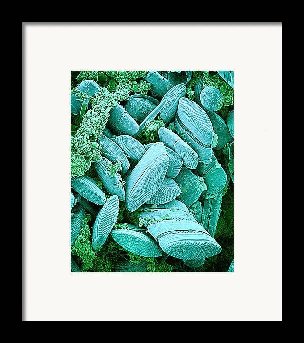 Diatom Framed Print featuring the photograph Diatoms, Sem by Susumu Nishinaga