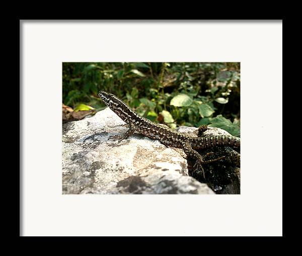 Lizard Framed Print featuring the photograph Dragon by Lucy D