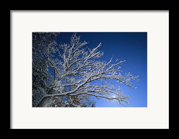 Outdoors Framed Print featuring the photograph Fresh Snowfall Blankets Tree Branches by Tim Laman