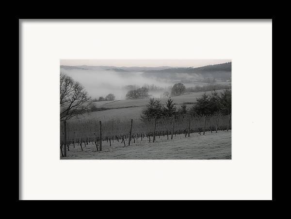 Vineyard Framed Print featuring the photograph Winter Vineyard by Jean Noren