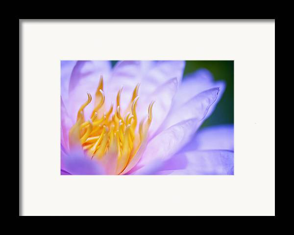 Beautiful Framed Print featuring the photograph by Kicka Witte
