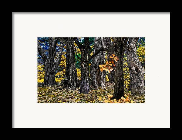 Landscape Framed Print featuring the photograph Autumn Landscape by Vladimir Kholostykh