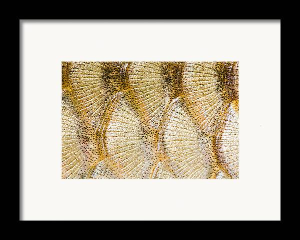 Abstract Framed Print featuring the digital art Fish Scales Background by Odon Czintos
