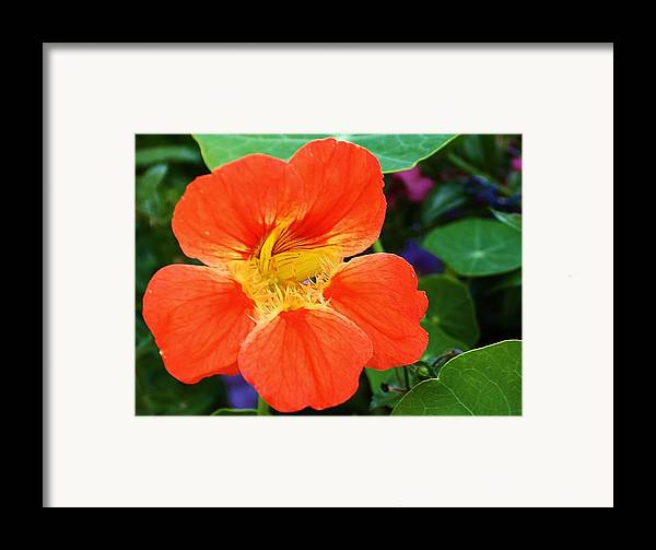 Flora Framed Print featuring the photograph Orange Delight by Bruce Bley