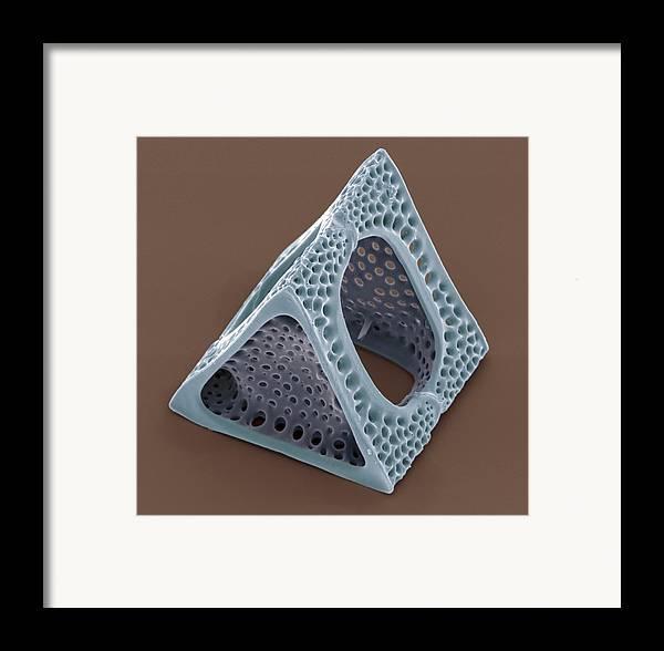 Triceratium Sp. Framed Print featuring the photograph Diatom, Sem by Steve Gschmeissner