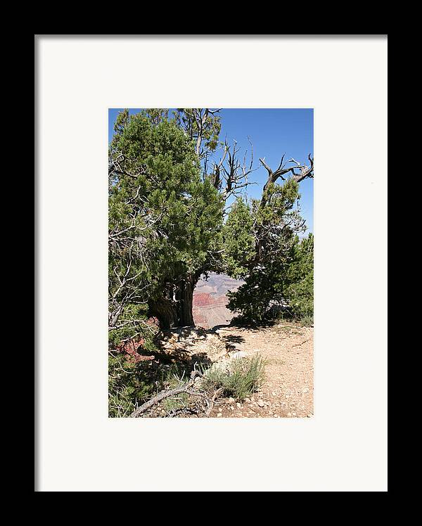 Adventure Framed Print featuring the photograph Grand Canyon National Park Usa Arizona by Audrey Campion