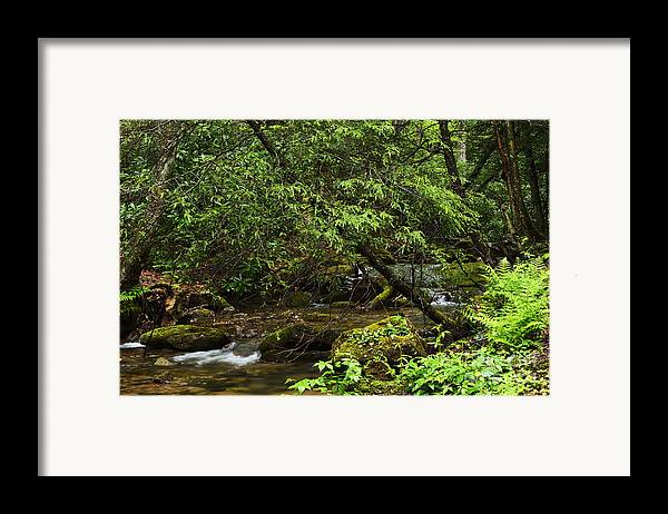 Rushing Mountain Stream Framed Print featuring the photograph Rushing Mountain Stream by Thomas R Fletcher