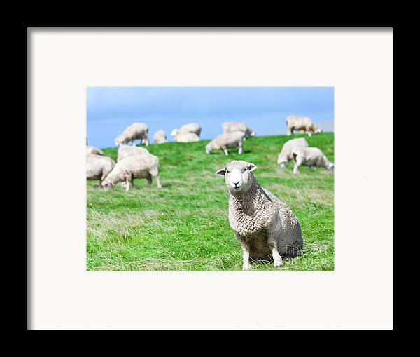 Sheep Framed Print featuring the photograph Sheeps by MotHaiBaPhoto Prints