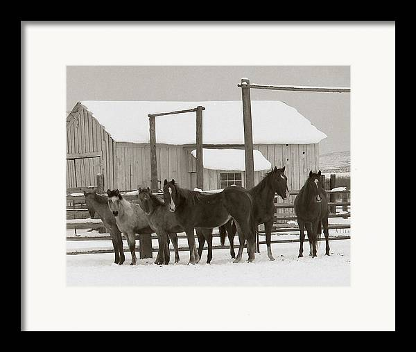 Horses Framed Print featuring the photograph 71 Ranch by Diane Bohna