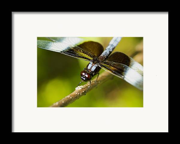 Macro Framed Print featuring the photograph Macro by Jack Zulli